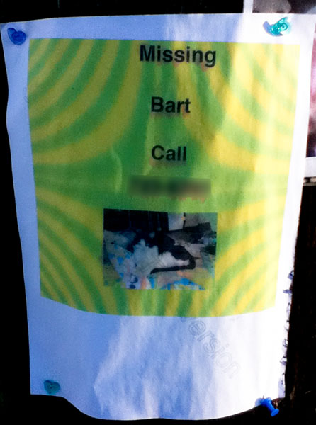 Lost Cat Poster for Bart