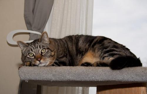 Otis Pondering Life