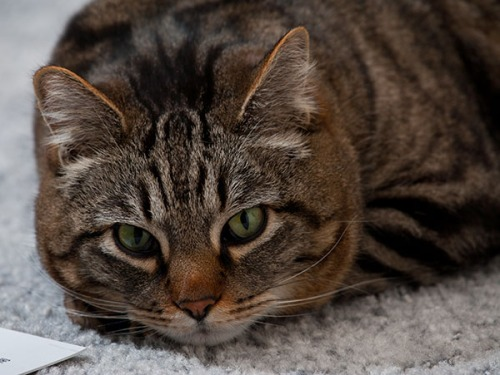 Otis resting