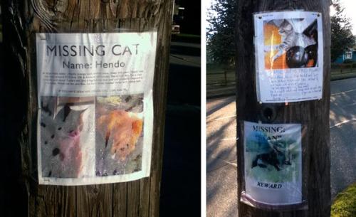 Three lost cat posters