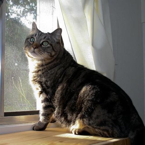 Otis ignoring the birds