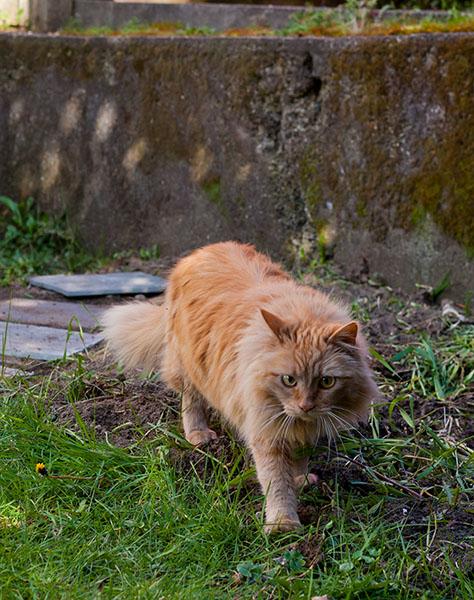 Mama Cat walking away