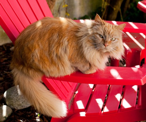 Mama Cat sulking on red chair