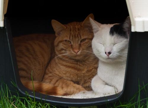 Domino and Franklin in the Toastitron