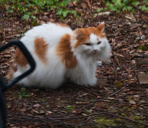 Unknown Limbo Kitty
