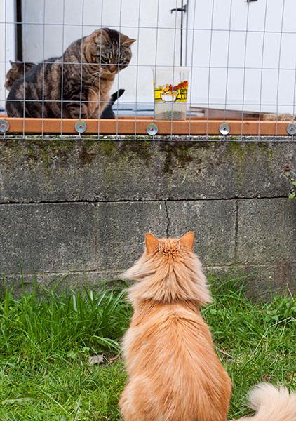 Mama Cat consults Otis