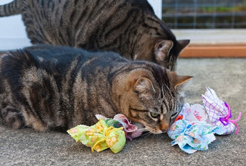 Otis and Oliver sniff toys