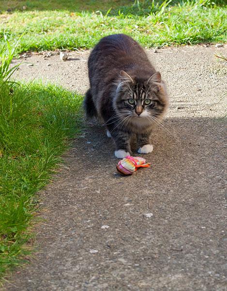 Thomas with toy