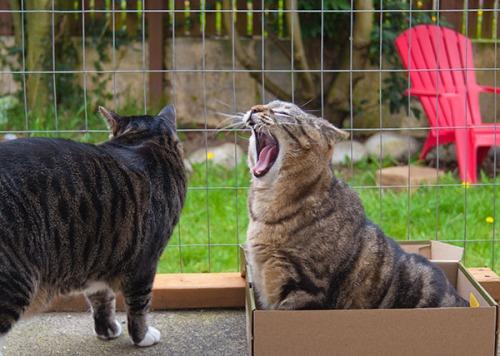 Otis yelling