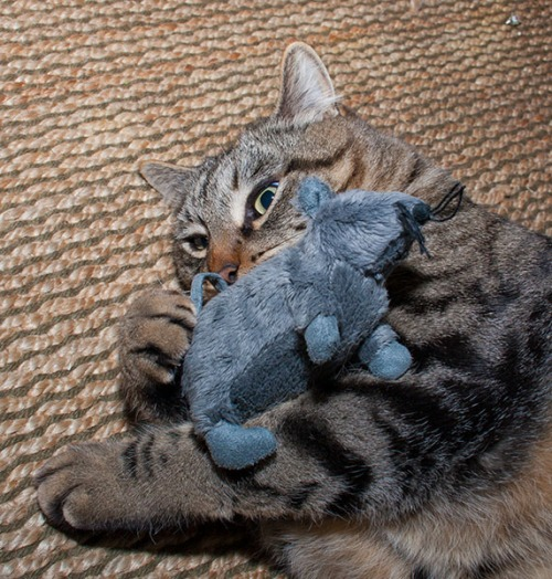 Otis with toy mouse