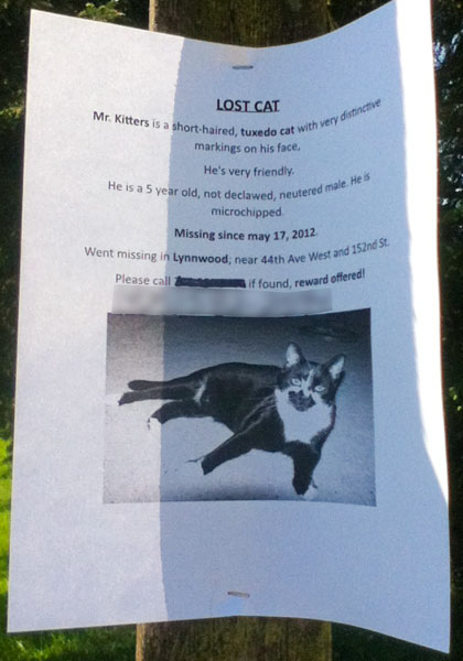 Lost Cat Poster- Mr Kitters