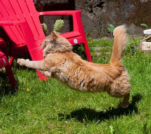 Mama's Lion Leap