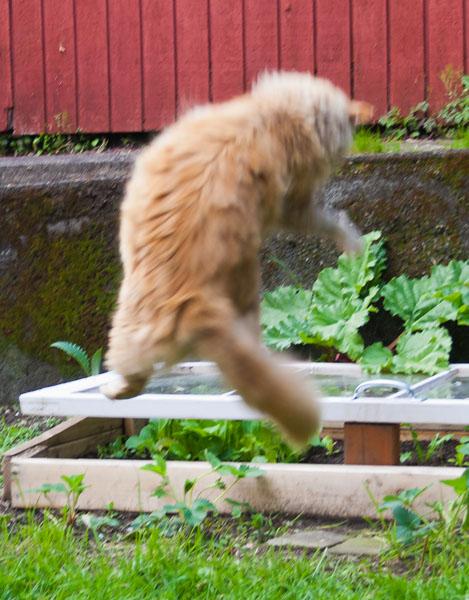 Mama Cat jumping