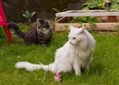 Thomas and Beatrice wondering what happened