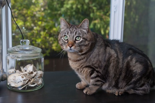 Otis with jar of bones