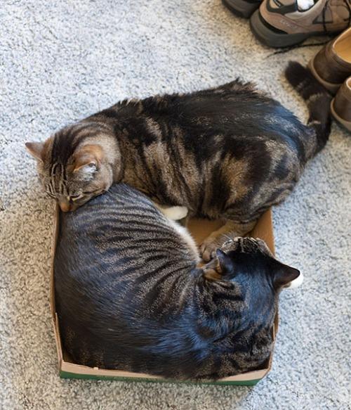 Otis and Henry 1