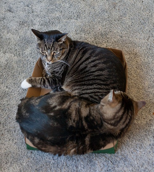Henry and Otis 3