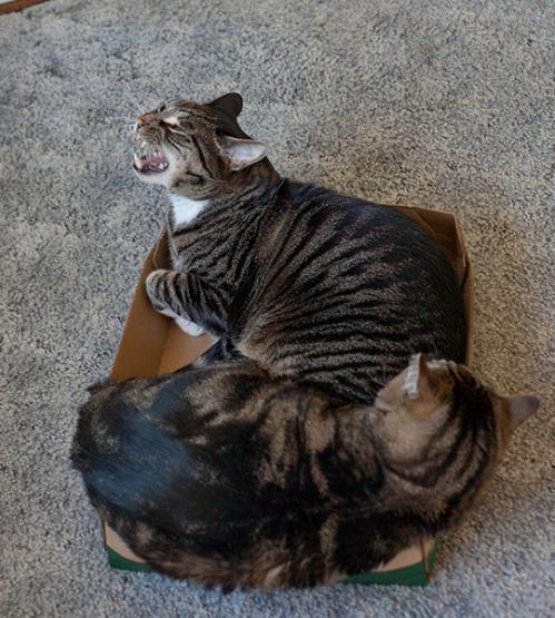 Otis and Henry 4