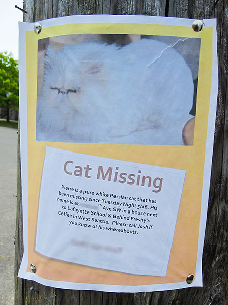 lost cat- Pierre
