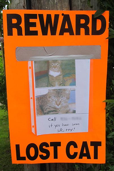 Lost Cat- Skitty