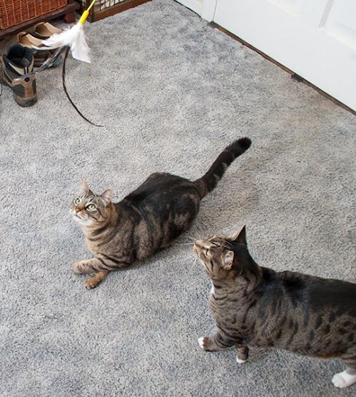 Oliver and Otis focusing