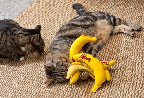 Otis hoarding bananas 2