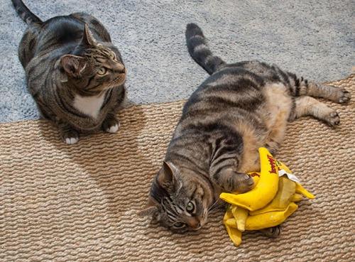 Otis hoarding bananas