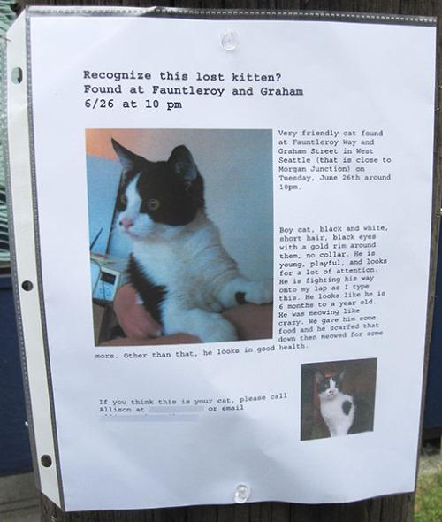found cat poster- tuxedo kitten-1