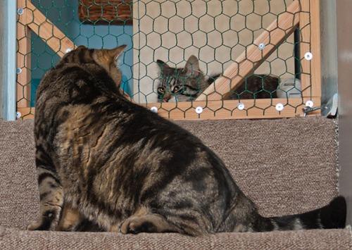 Otis and Thomas, Valhalla