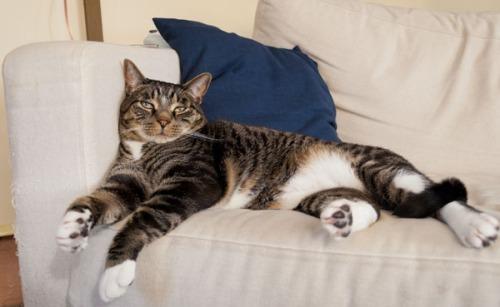 Henry relaxing-1