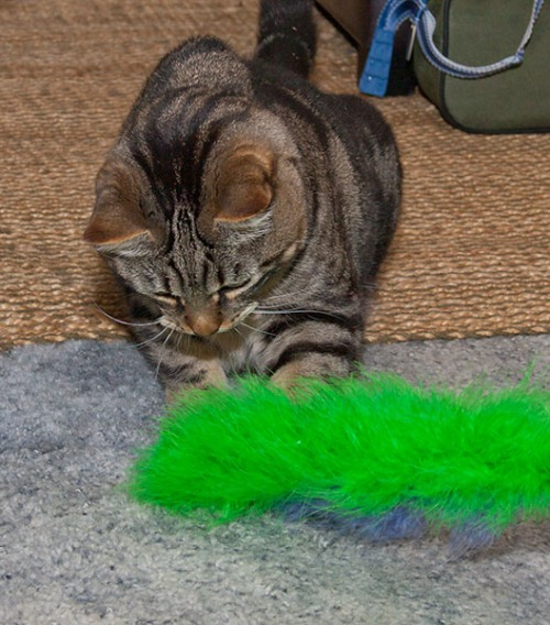 Otis with fluffy tail toy 1
