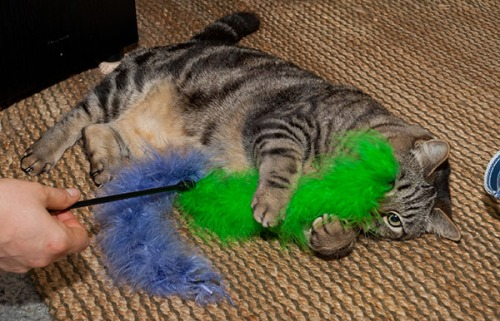 Otis with fluffy tail toy 2