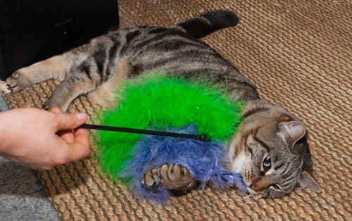 Otis with fluffy tail toy 3