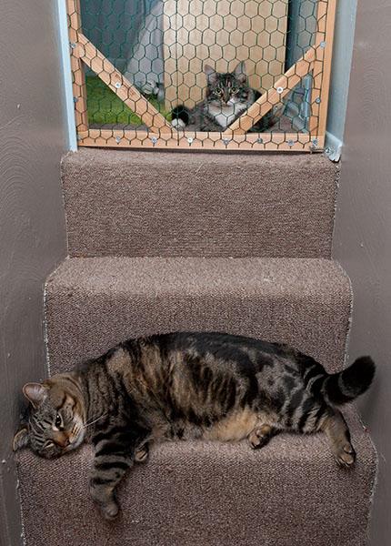 Thomas relaxing by door with Otis