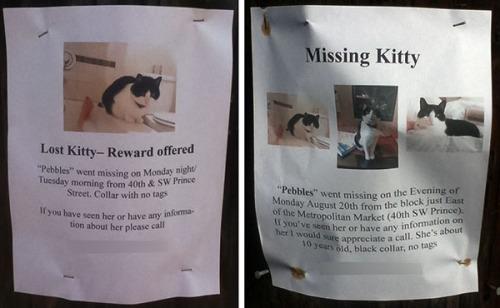 Lost Cat- Pebbles