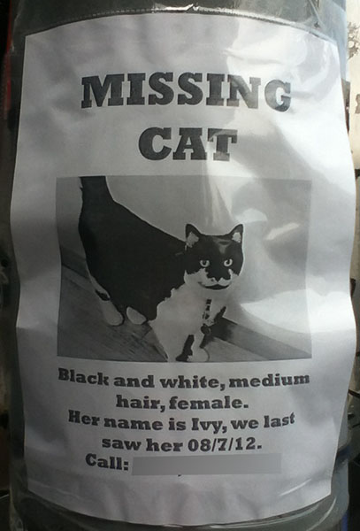 Lost Cat Poster- Ivy-2