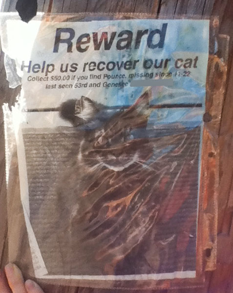 Lost Cat Poster- Pounce-2