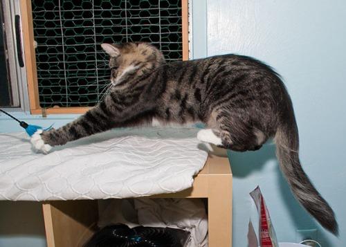 Levitating Thomas 2