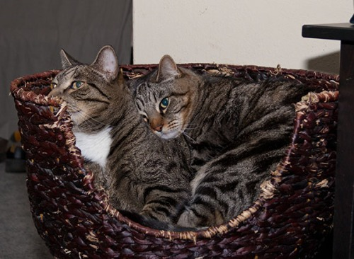 Otis and Oliver in basket