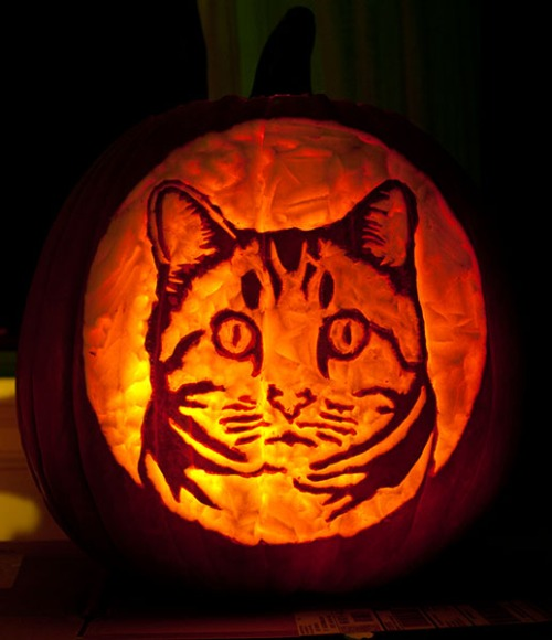 Otis Pumpkin Lit