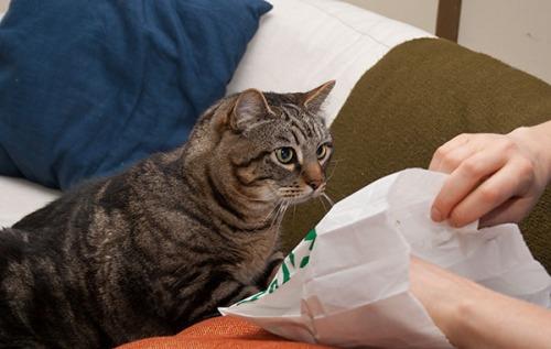 Otis wanting croissant 2