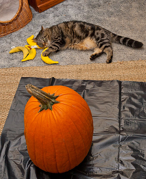 Otis with Pumpkin 2