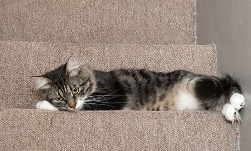 Thomas sleepy on stairs