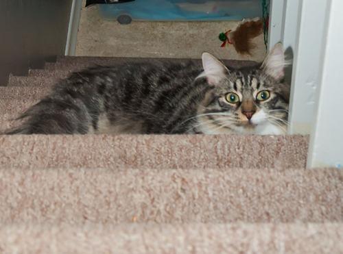 Thomas sneaky on stairs