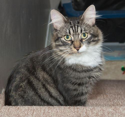Thomas staring on stairs