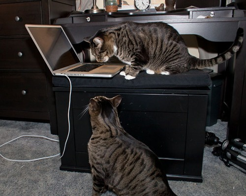 Henry and Oliver at computer
