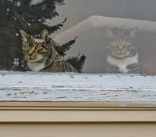 Henry and Oliver in window waiting