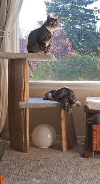 Henry and Otis watching shinies
