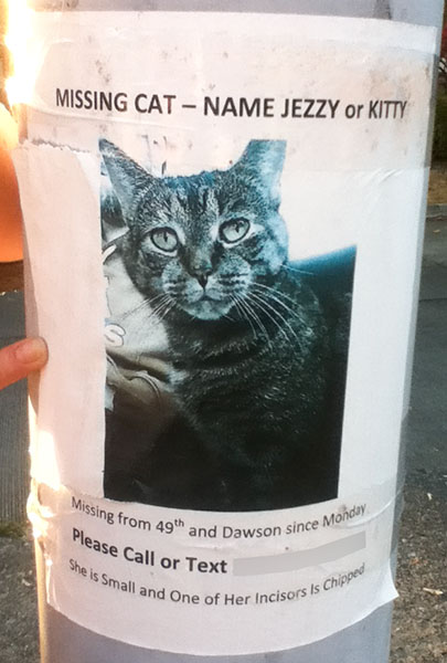 Lost Cat Poster- Jezzy or Kitty-1-1