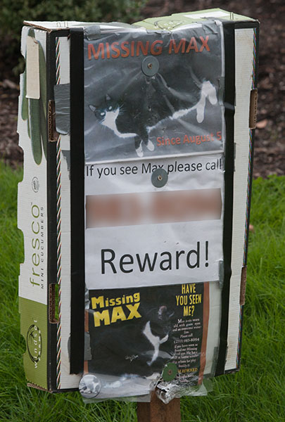 Lost Cat Poster- Max-1